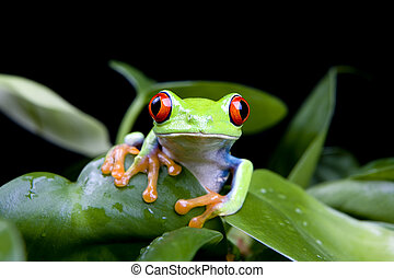 frog in plant isolated on black - frog in a plant isolated...