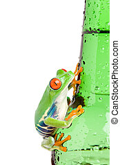 red-eyed tree frog on bottle isolated - red-eyed tree frog...