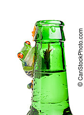 frog on a bottle isolated on white - frog on a green wet...