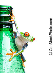 frog on bottle isolated white - frog on a bottle - a...