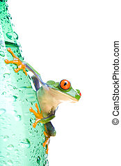 tree frog on water bottle isolated