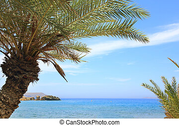 Seascape with blue sky, sea and palm trees
