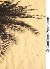 Palm tree fronds casting shadow on the sand