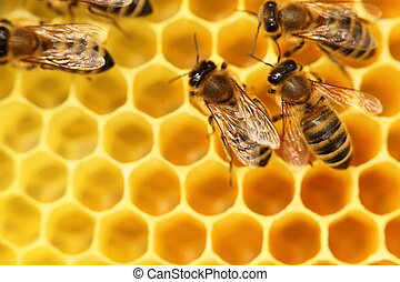bees and cells - some bees are going with yellow cells in...