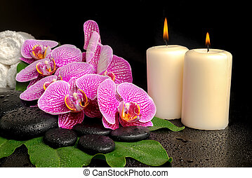 spa setting of blooming twig violet orchid (phalaenopsis) on...