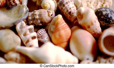 Close up cockleshell, shells and seashells Macro video shift...