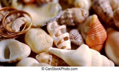 Close up golden wedding rings on shells. Macro video shift...