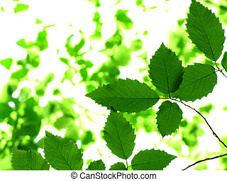 nature - green leaves background in sunny day...