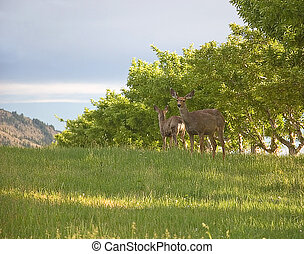 2 Deer - Got Your Back - These 2 deer are alert and almost...
