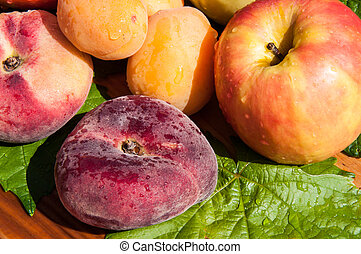 Fig peach or Prunus persica plant of the rose family,...