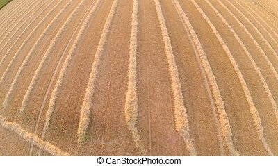 Aerial of a harvested grainfield