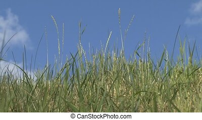 The grass on a background of clouds - The camcorder is...