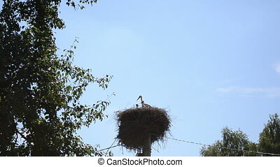 stork bird nest pole sky - Stork bird family (ciconia) in...