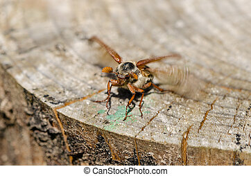 stump edge crawl beetle bug spread wings try fly - old...