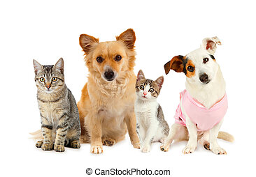 ねこ, グループ, 犬