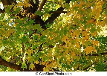 綠色, 樹, 黃色, 葉子, 秋天