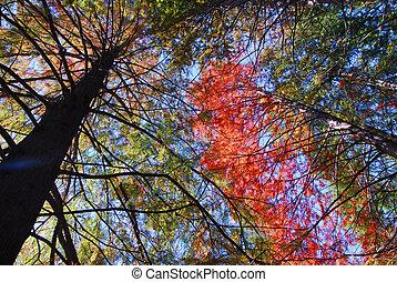 橙, 綠色, 樹, 葉子, 秋天