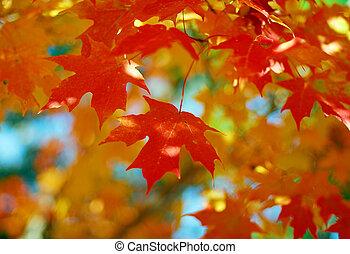 Orange Maple Tree Fall Foliage - Orange Fall Foliage colors...