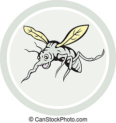 Mosquito Flying Front View Cartoon