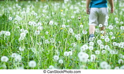 Child walking among dandelions - Little boy walking on the...