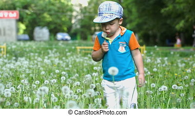Little child blowing dandelion - Little child making efforts...