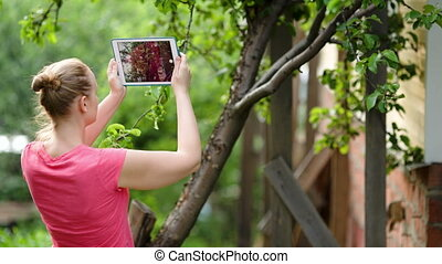 Young woman taking pictures of nature scenes with her pad -...