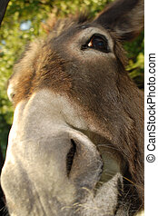 donkey - extreme close up of a donkeys face