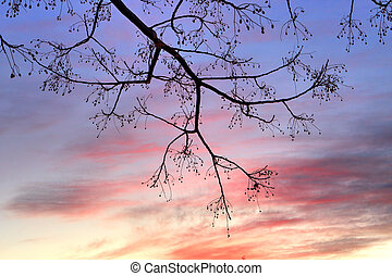 Winter Sunset and tree - Winter sunset and silhouette of a...