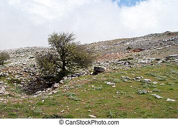 rocky mountain Ataviros - meager rocky mountain landscape...