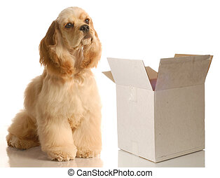 dog sitting beside box - moving or shipping concept -...