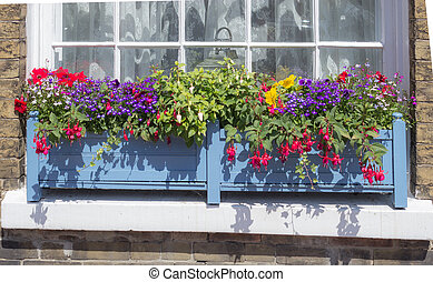 Window Box - Bright, colorful flowers in a blue window box