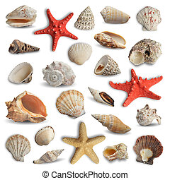 seashells - collection of seashells isolated on white...