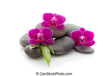 Spa stones - Spa masage stones and orchid isolated on the...