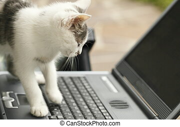cat and laptop - Cat is siting in front of a laptop
