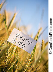 Enjoy life - White card with Enjoy life sign in wheat field....