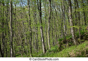 Green forest with trees and grass