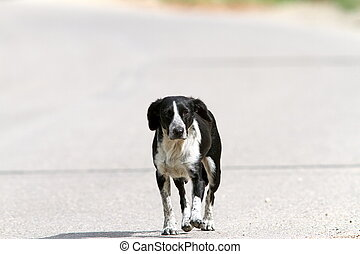 feral dog walking on the street at noon