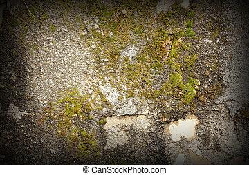 moss on damaged wall