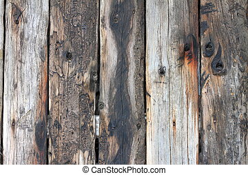 old wood planks with insects marks