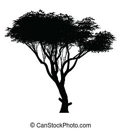 acacia - this is acacia tree silhouette. White-space shapes...