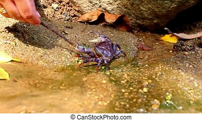 female hand touches crab stick in deep forest pond. Video...