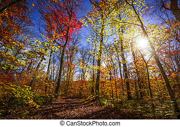 Sunshine in fall forest - Sun shining through colorful...