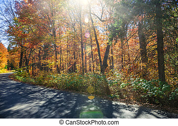 Sunflare in fall forest - Sunflare in colorful fall forest...