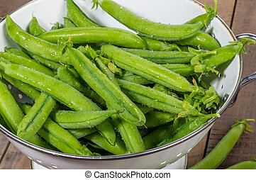 Fresh peas in a white colander - Fresh picked greens peas in...