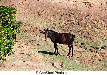 Andalusian horse on pasture - Purebred andalusian spanish...
