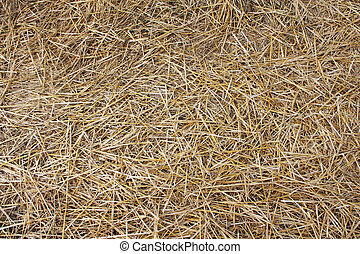 Hay texture - Dry hay texture background macro close up