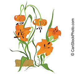 Tiger lily flower - Hand drawn illustration of tiger lily...