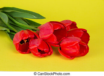 Bouquet of red tulips on a yellow background