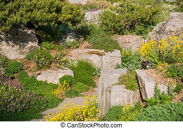 Summer Rockery Garden Closeup Photo.