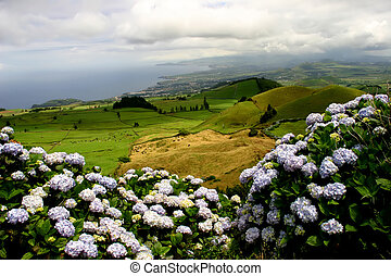 flowers - azores green fields in sao miguel island